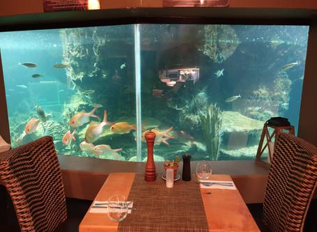 Restaurants in the Bay of Islands