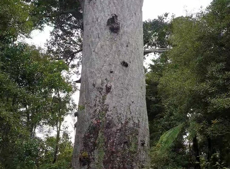 A huge tree!!