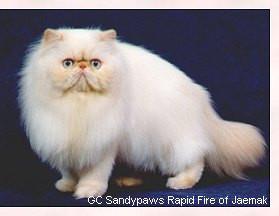 cat3 (1).jpg