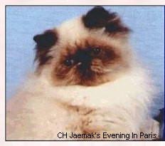cat2 (1).jpg