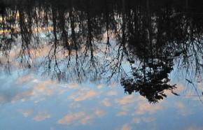 Reflets forêt Tronçais étang Morat