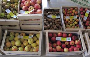 Les pommes bio des croqueurs sept 2018 C