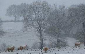 hiver  en Bourbonnais 01.17 C.WEISS.jpg