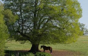 Cheval arbre Bourbonnais 2019 C.WEISS.jp