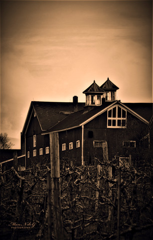 sunset orchard barn.jpg