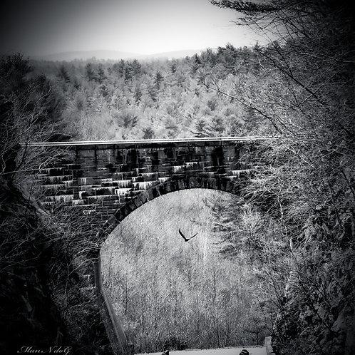 Eagle under the bridge