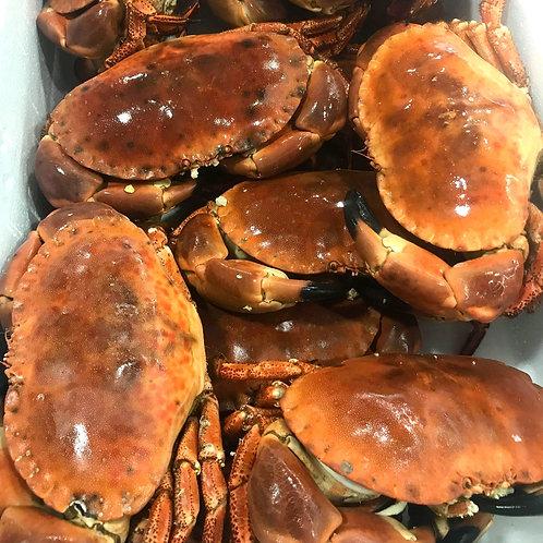 Boiled Bridlington Crab