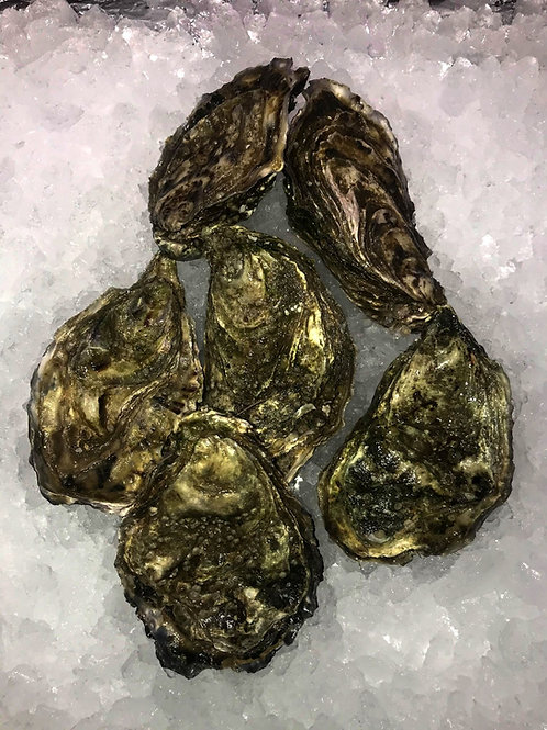 Oysters - bag of 6