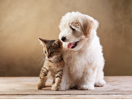 Could your Pet Benefit from a Pet Nutritionist?