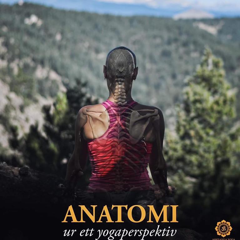 Anatomikurs med Sara Alenius