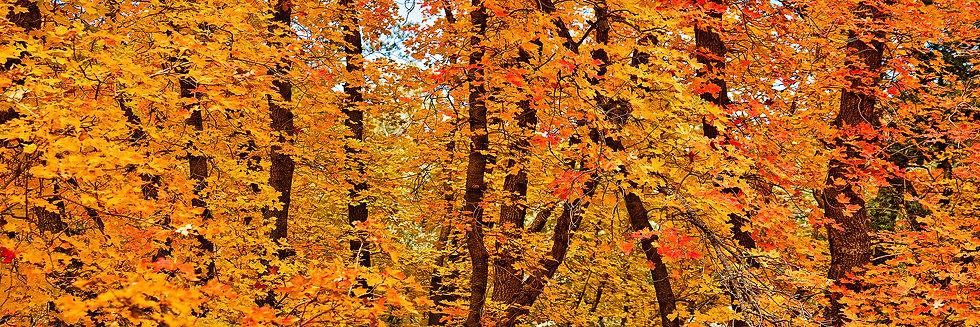 Autumn Dream TP4020