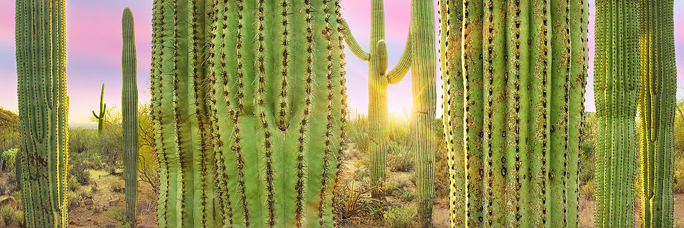 Desert Solitude TP6446