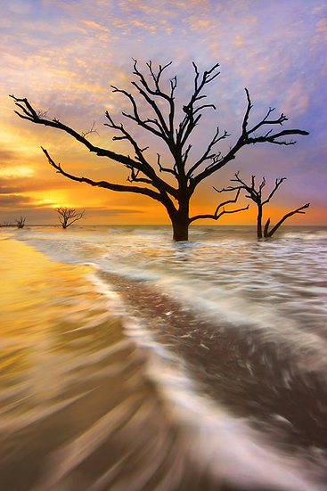 Tidal Trees FF8907