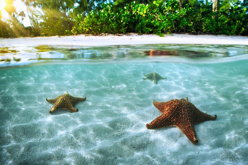 Starfish Point FL9477