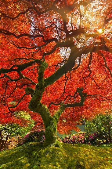 Wishing Tree FF6852