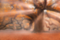 Landing Angels 8180_1 contest.jpg
