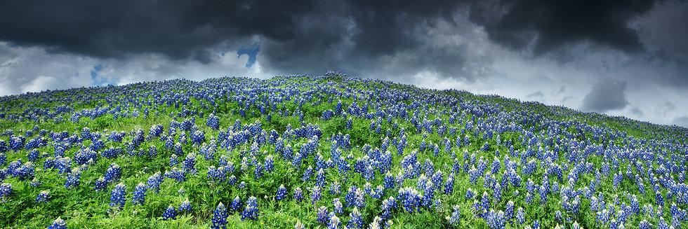Stormy Blues TP6116