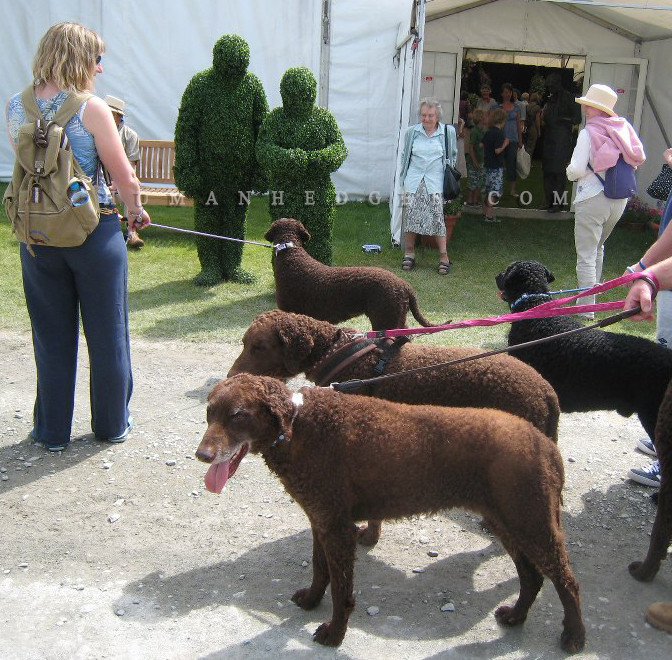Topiary with dogs