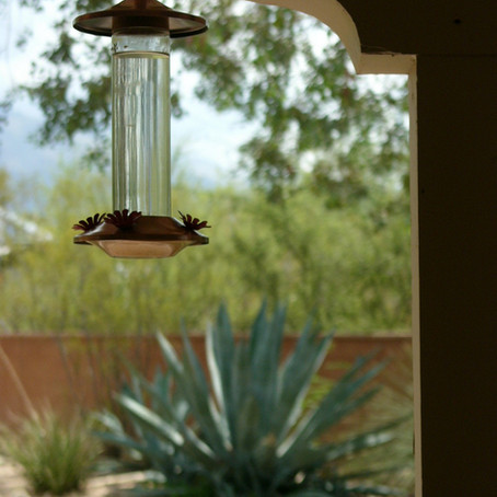 Bless the hummingbird