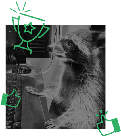 raccoon_awarded.png