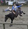 Chiropraktik Pferd Heilpraktiker Völklingen Saarland Richard Klinger Einrenken Knochenbrecher Pferdephysiotherapie Master of Chiropractic Rückenschmerzen Bandscheibenvorfall