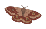 butterfly only-01.png