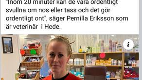 Besök av P4 Jämtland på distriktsveterinärerna i Hede