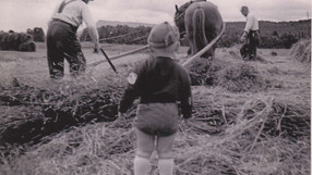 Slåttertider på 50-talet