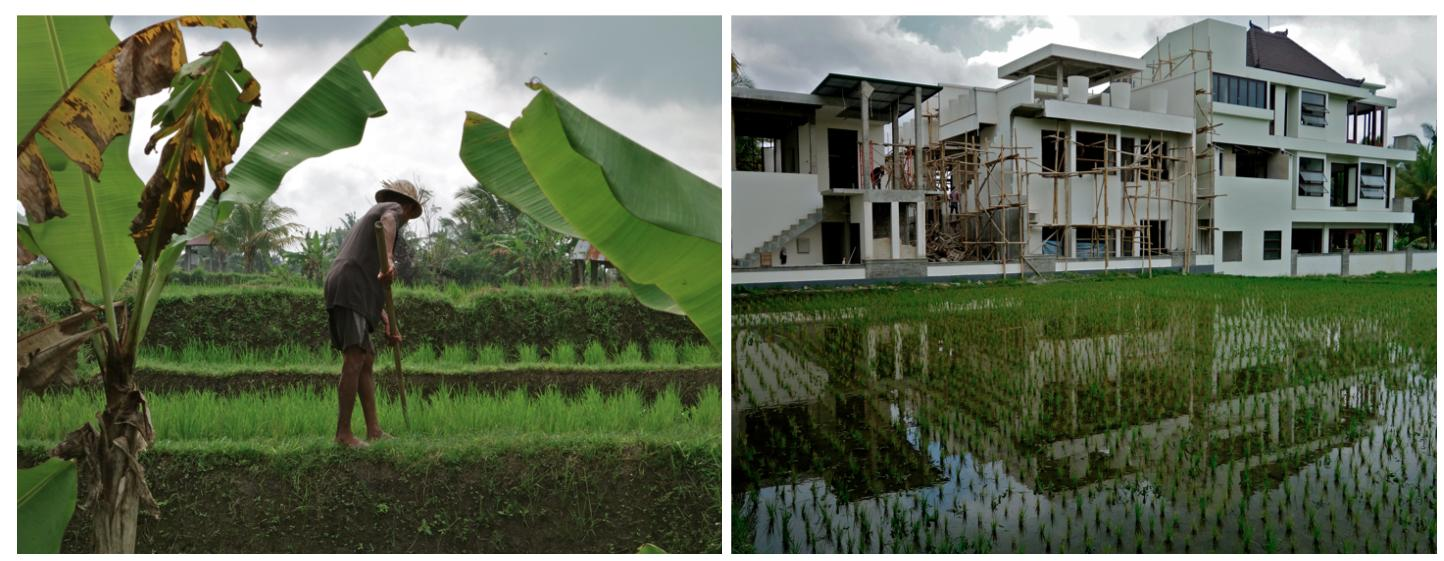 bali overdevelopment
