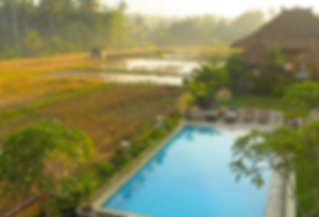 bali overdevelopment rice paddy