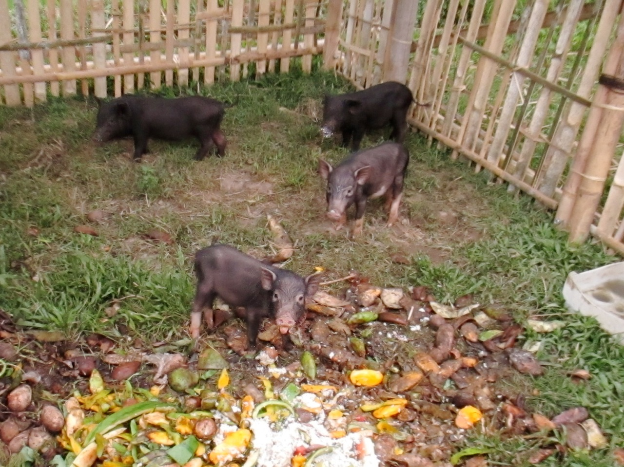 The piglets have arrived!