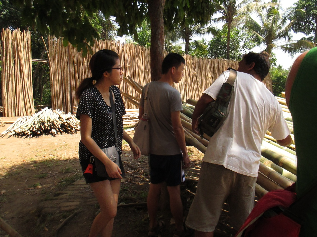 Selecting Bamboo