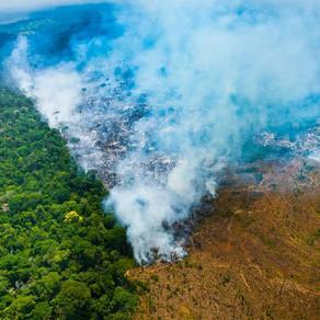 Impactos dos Desmatamentos Ilegais nas Exportações Brasileiras