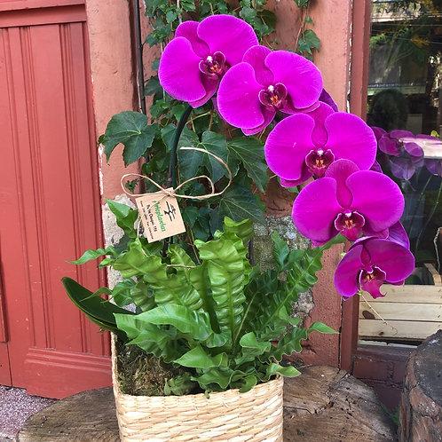 Arranjo orquídea e verde