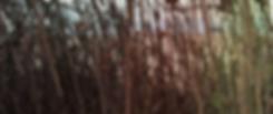 Screen Shot 2019-01-25 at 8.05.49 PM.png