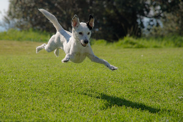Confident Dog (1).jpg