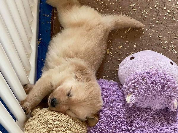 Puppy Stretch.jpg