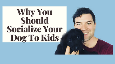 Socialize Your Dog To Kids.png