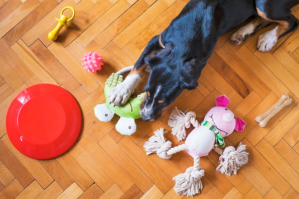 dog with lots of toys.jpg