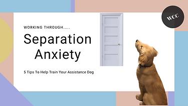 Seperation Anxiety Thumbnail.png