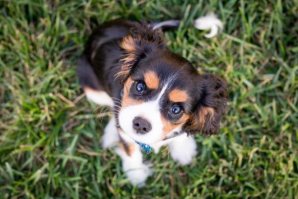 Puppy on grass.jpg