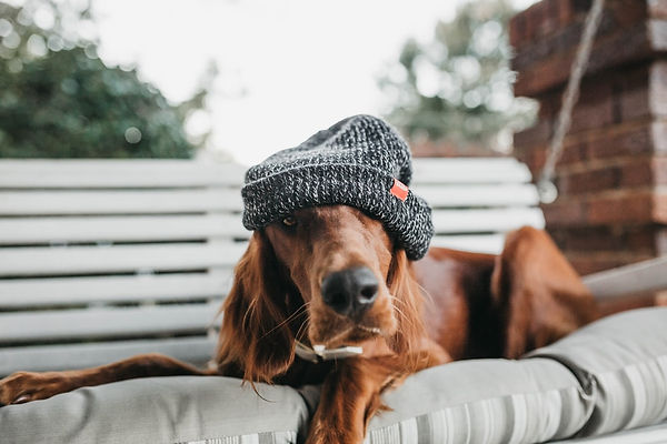Dog Beannie.jpg