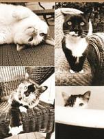 Rec. Memo Block - Cat Laziness