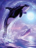 Journal - Orca