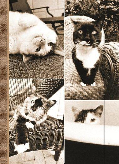 Small Journal - Cat Laziness - 03-03-28-