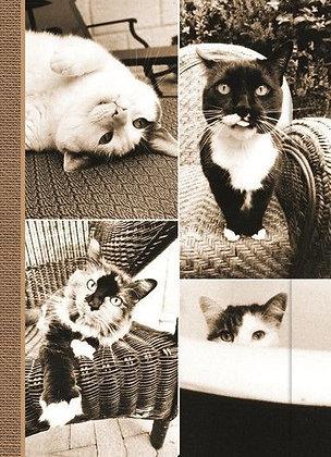Small Journal - Cat Laziness