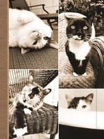Journal - Cat Laziness
