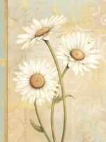 Notebook - Beautiful Daisies