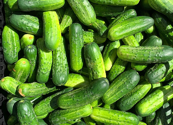 PICKLING CUCUMBERS - Small/Mediums