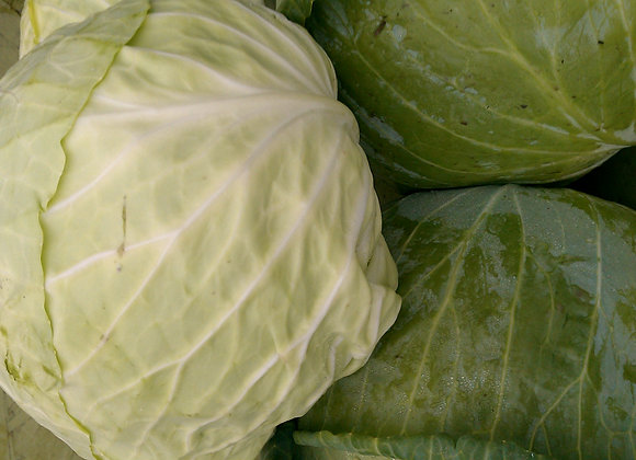 MED/ LARGE GREEN CABBAGE